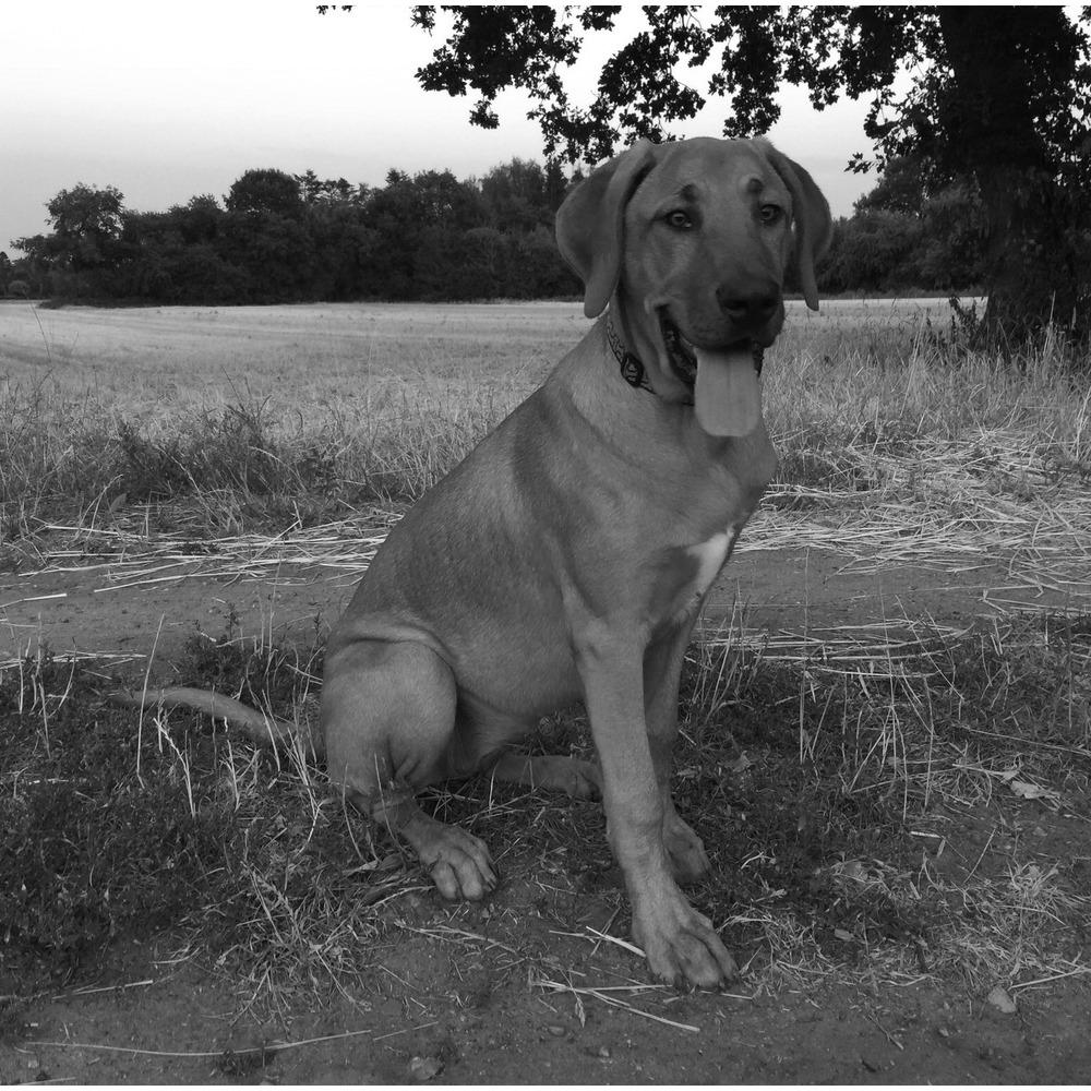 Cees, Chief Executive Dog